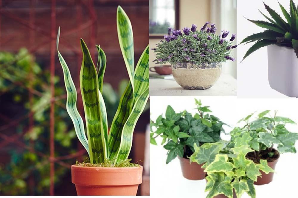 Φυτά που θα σας βοηθήσουν να κοιμηθείτε καλύτερα